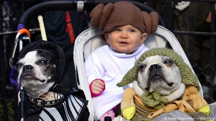 Bildergalerie - Hunde feiern Halloween