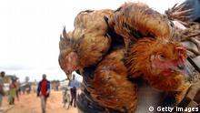 Hühner Markt Kongo Afrika