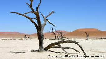 A dead tree with sand dunes in the background (Photo: picture-alliance/Bildagentur-online)