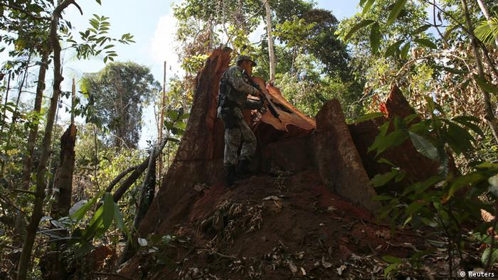 A police officer inspects a tree illegally felled in the Amazon rainforest in Jamanxim National Park near the city of Novo Progresso, Para State, June 21, 2013. The Amazon rainforest is being eaten away at by deforestation, much of which takes place as areas are burnt by large fires to clear land for agriculture. Initial data from Brazil's space agency suggests that destruction of the vast rainforest - the largest in the world - spiked by more than a third over the past year, wiping out an area more than twice the size of the city of Los Angeles. If the figures are borne out by follow-up data, they would confirm fears of scientists and environmental activists who warn that farming, mining and Amazon infrastructure projects, coupled with changes to Brazil's long-standing environmental policies, are reversing progress made against deforestation. Environmental issues will be under the spotlight as a United Nations Climate Change Conference opens in Warsaw, Poland, on November 11. Picture taken on June 21, 2013. REUTERS/Nacho Doce (BRAZIL - Tags: AGRICULTURE CRIME LAW POLITICS ENVIRONMENT) ATTENTION EDITORS: PICTURE 29 OF 55 FOR PACKAGE 'AMAZON - FROM PARADISE TO INFERNO' TO FIND ALL IMAGES SEARCH 'AMAZON INFERNO'