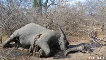 Getöteter Elefant im Niassa-Park
