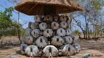 Getötete Elefanten im Niassa-Park