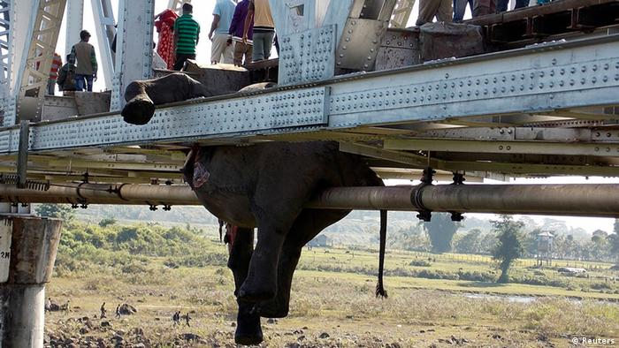 People walk past the hanging carcass of an elephant on a railway bridge in Khunia range in Jalpaiguri district in the eastern Indian state of West Bengal November 14, 2013. At least seven elephants were killed after a passenger train hit a herd of elephants while they were crossing a railway track near a bridge on Wednesday evening, local media reported. REUTERS/Stringer (INDIA - Tags: DISASTER ANIMALS TPX IMAGES OF THE DAY TRANSPORT)