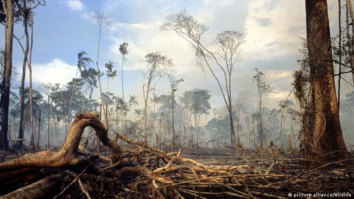 Logging in the Amazon (Photo: picture alliance/Wildlife)