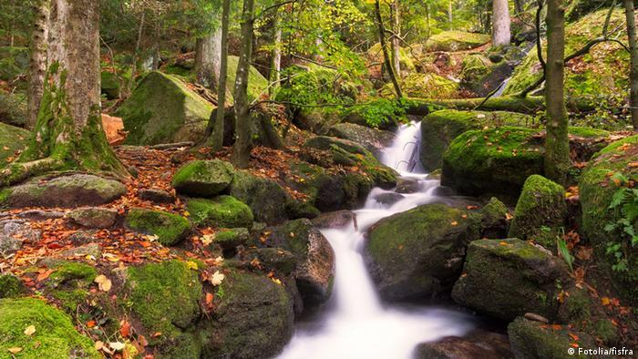 Objek wisata di Black Forest Jerman