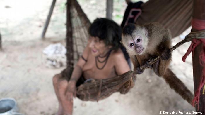 Embora vivam em aldeias, os índios Awá mantém hábitos nômades