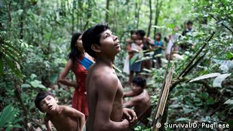 Eine Awá-Gruppe auf Nahrungssuche mit Pfeil und Bogen (Foto: Domenico Pugliese/Survival International)