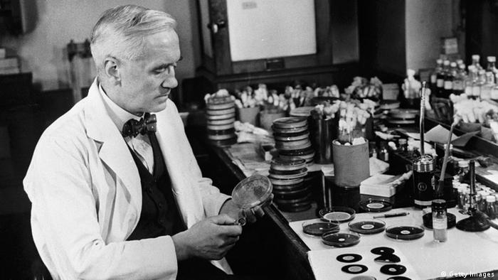 Alexander Fleming, discoverer of penicillin, studies mould cultures in his laboratory at the Wright Fleming Institute in London