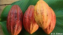 Das Wunder von San Martín Bio-Kakao-Anbau in Peru