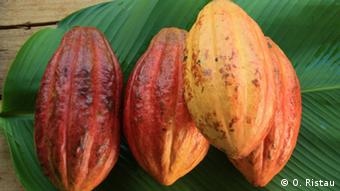 Plodovi kakaovca