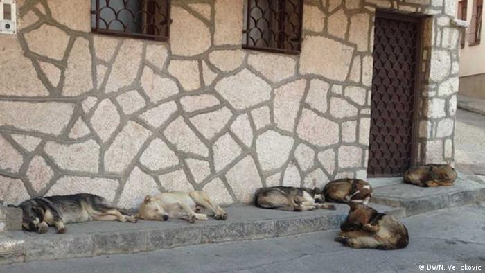 Mehrere Hunde schlafen auf einem Bürgersteig