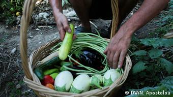 Hands putting vegetables into a basket Copyright: DW/N. Apostolou