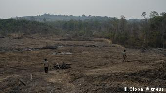 Deforested area (Photo:Global Witness)