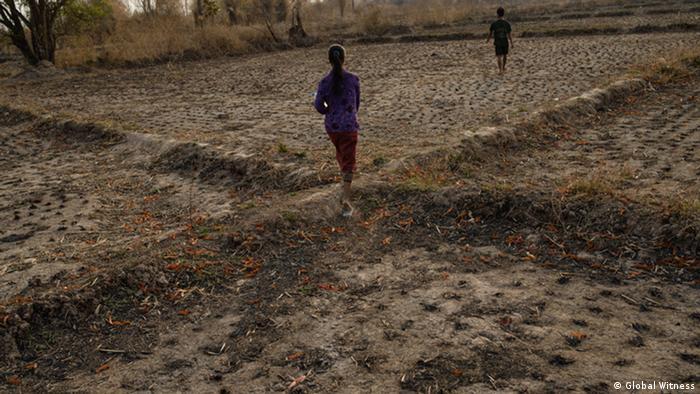 Laos Reisfeld Opfer der Kautschuk Plantage