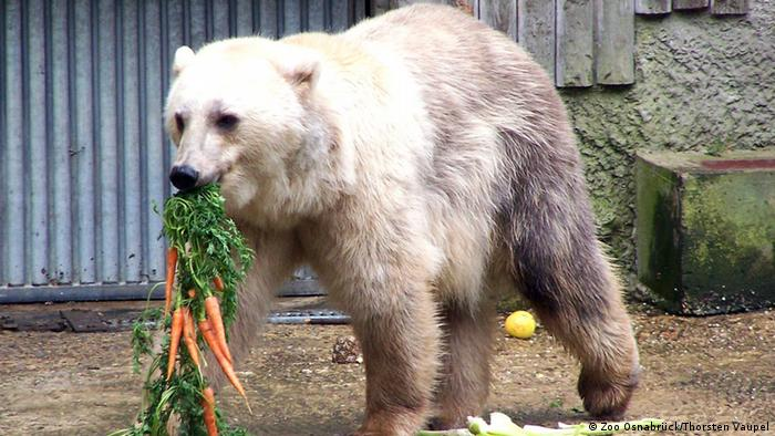 Bildergalerie Hybridbären