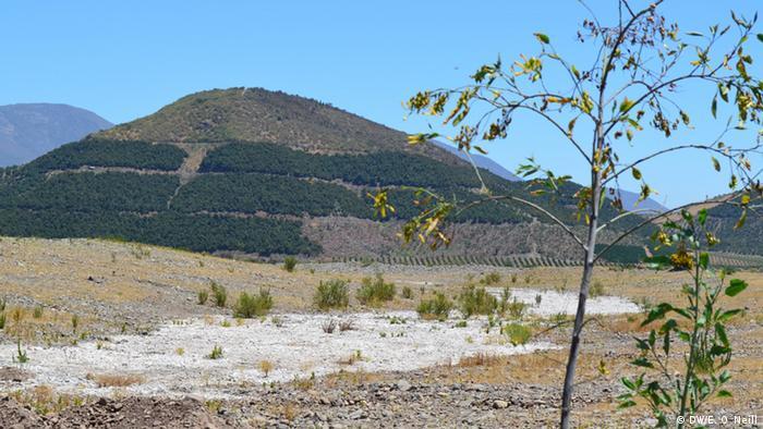 Franjas verdes de árboles, en medio de un paisaje desértico.