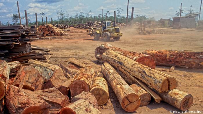 Abgeholzte Baumstämme im brasilianischen Amazonasgebiet (Foto: picture alliance/dpa)