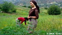 تنتشر زراعة القنب الهندي في المغرب خصوصاً في الأجزاء الشمالية من البلاد (أرشيف)