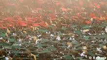 Volunteers prepare to form a large flag of Bangladesh as the nation celebrates National Victory Day at the National Parade ground in Dhaka December 16, 2013. According to the organizers, 27,117 volunteers formed a large human national flag for six minutes and sixteen seconds as they attempted to set a new Guinness world record. Bangladesh won independence from Pakistan on December 16, 1971, following a nine-month guerrilla war which cost millions of lives. REUTERS/Andrew Biraj (BANGLADESH - Tags: POLITICS ANNIVERSARY SOCIETY)