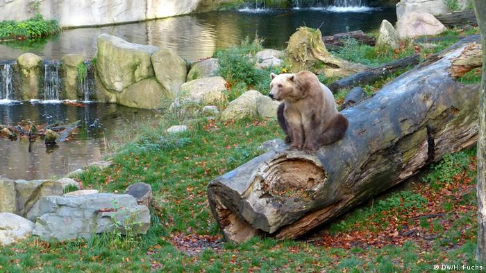 Medvjed Taps