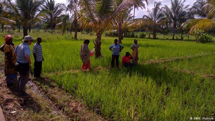Rice field in Tanzania