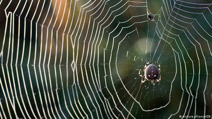 Uma aranha em sua teia