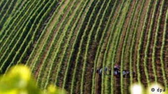 Weinlese in steilen Lagen
