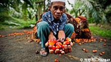Sumatra - Palmöl Anbau