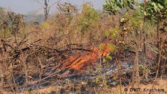 Brandrodung in Sambia (Foto: T. Kruchem/DW)