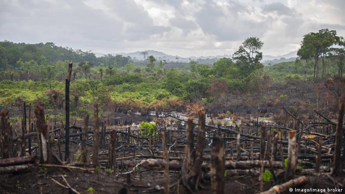 Brasilien Urwald Rodung verbrannte Bäume