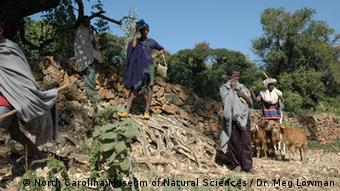 Steinmauer, Church forest, Äthiopien