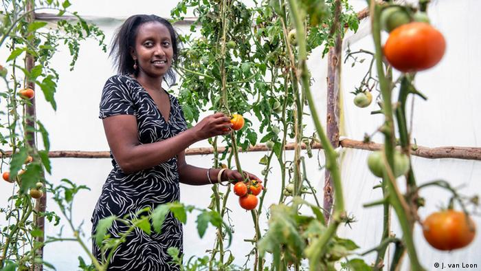 Mary Gitau stands among her tomato plants (Photo: Jeroen van Loon)