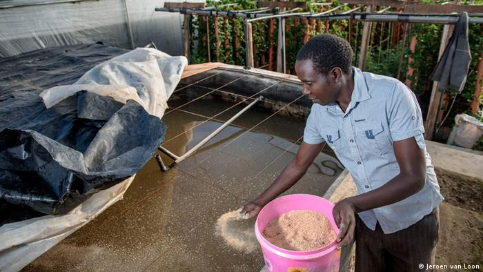 A young male farmer feeds fish in an aquaponics system in Kenya (Photo: Jeroen van Loon)