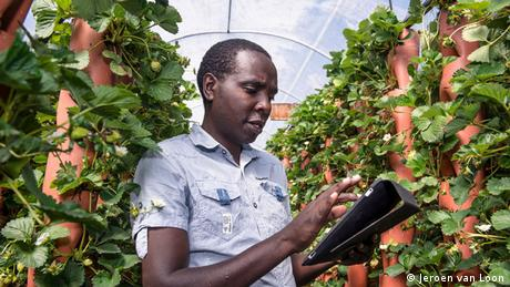 A young man works on his iPad amidst the plants in a greenhouse (Photo: Jeroen van Loon)