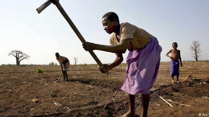 African women farming the land