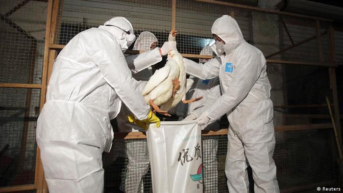 China Vogelgrippe H7N9
