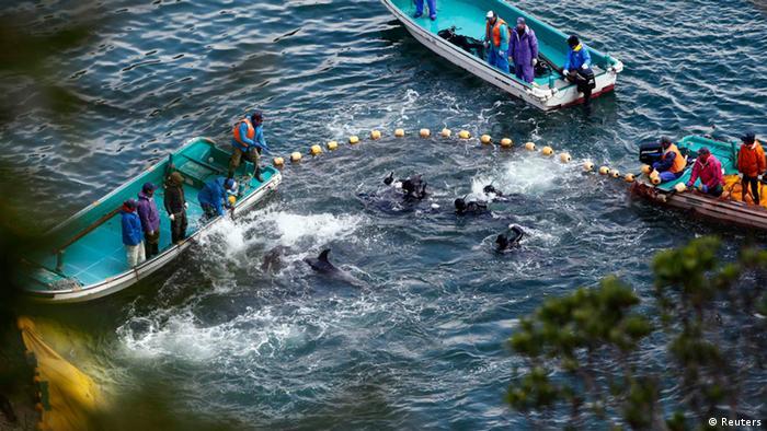 Taiji: Jagd auf Delfine