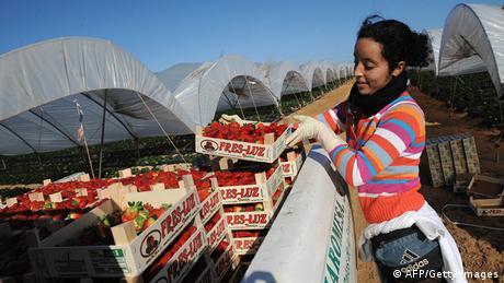 African workers in Spain for harvesting strawberries