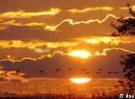 قطار پرندگان مهاجر در غروب آفتاب