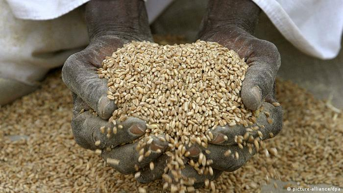 Hände voller Weizenkörner Foto: Nic Bothma dpa