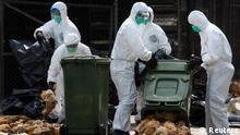 Vogelgrippe Hongkong China 2014