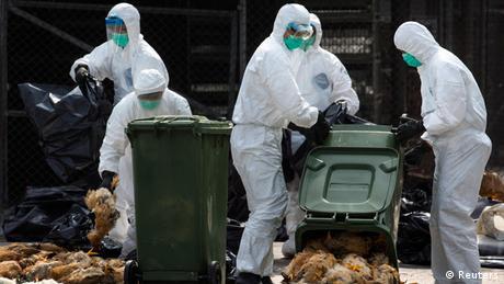 Vogelgrippe China 2014