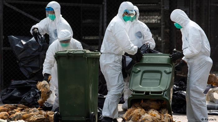 کارمندان یک مرغداری که ویروس بین مرغ هایش شایع شده بود، مبتلا شده اند.
