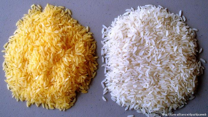 Golden Rice (left) and white rice (photo: picture alliance)