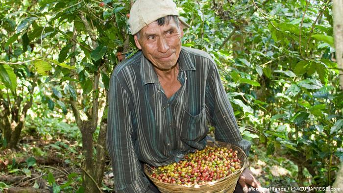 Chiapas Kaffeeanbau