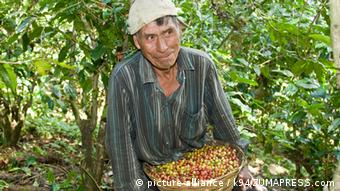 Photo: A plantation worker with a basket full of coffee beans (Foto: picture alliance/Zumapress)