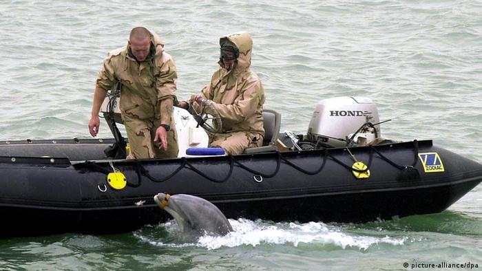 Mitarbeiter der US-Navy mit Delfin