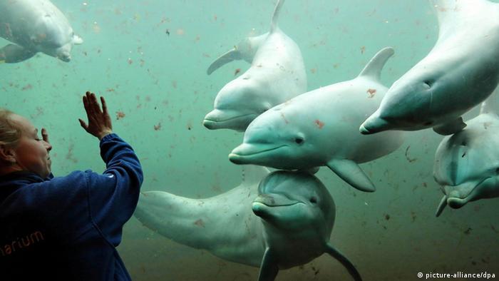 Delfin Training