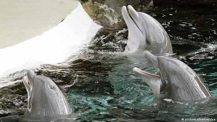 Delfine im Delfinarium in Duisburg