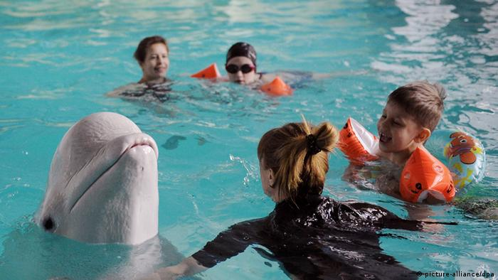 La mayoría de las crías de delfines no sobreviven en cautiverio.